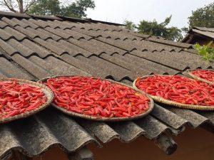 Shivapur Bardiya Nepal