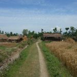 Countryside Bardia National Park