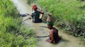 Tharu women fishing Bardia Nepal