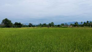 Countryside Bardia Nepal