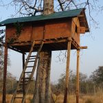 Tree house Bardia National Park Nepal